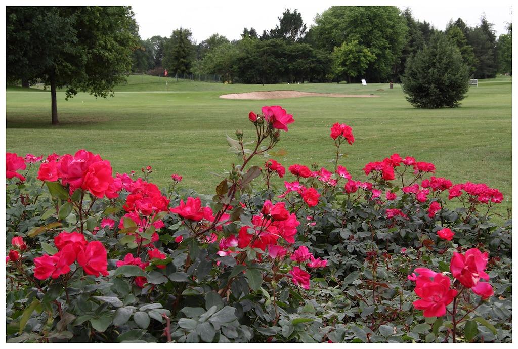 rosales-ferrer-campos-golf-rosa