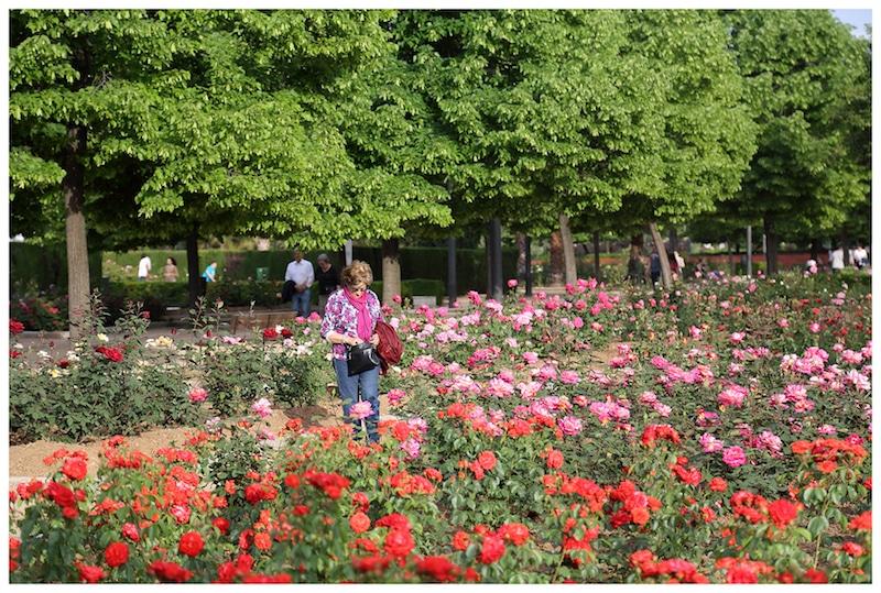 rosales-ferrer-jardines-parques-rosaledas