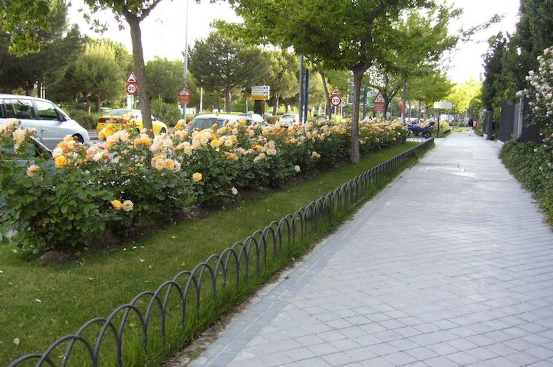 Rosales Ferrer / Avenidas