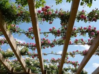 rosales-ferrer-cerramientos-pergolas-rosa