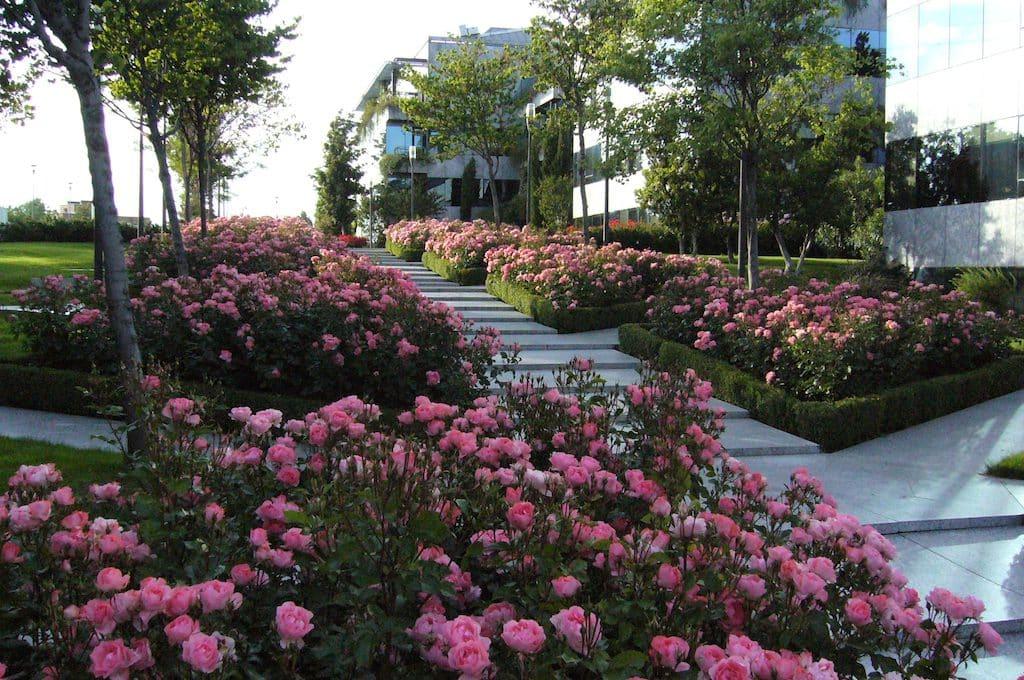 rosales-ferrer-invierno-sombra-rosa