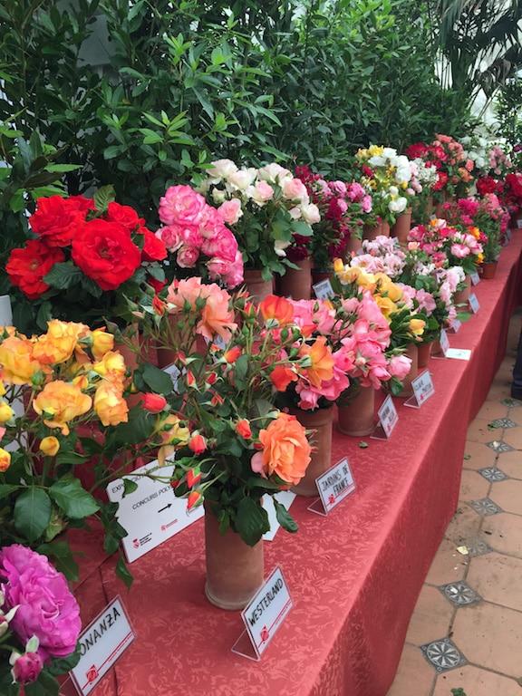 rosales-ferrer-concursos-rosa
