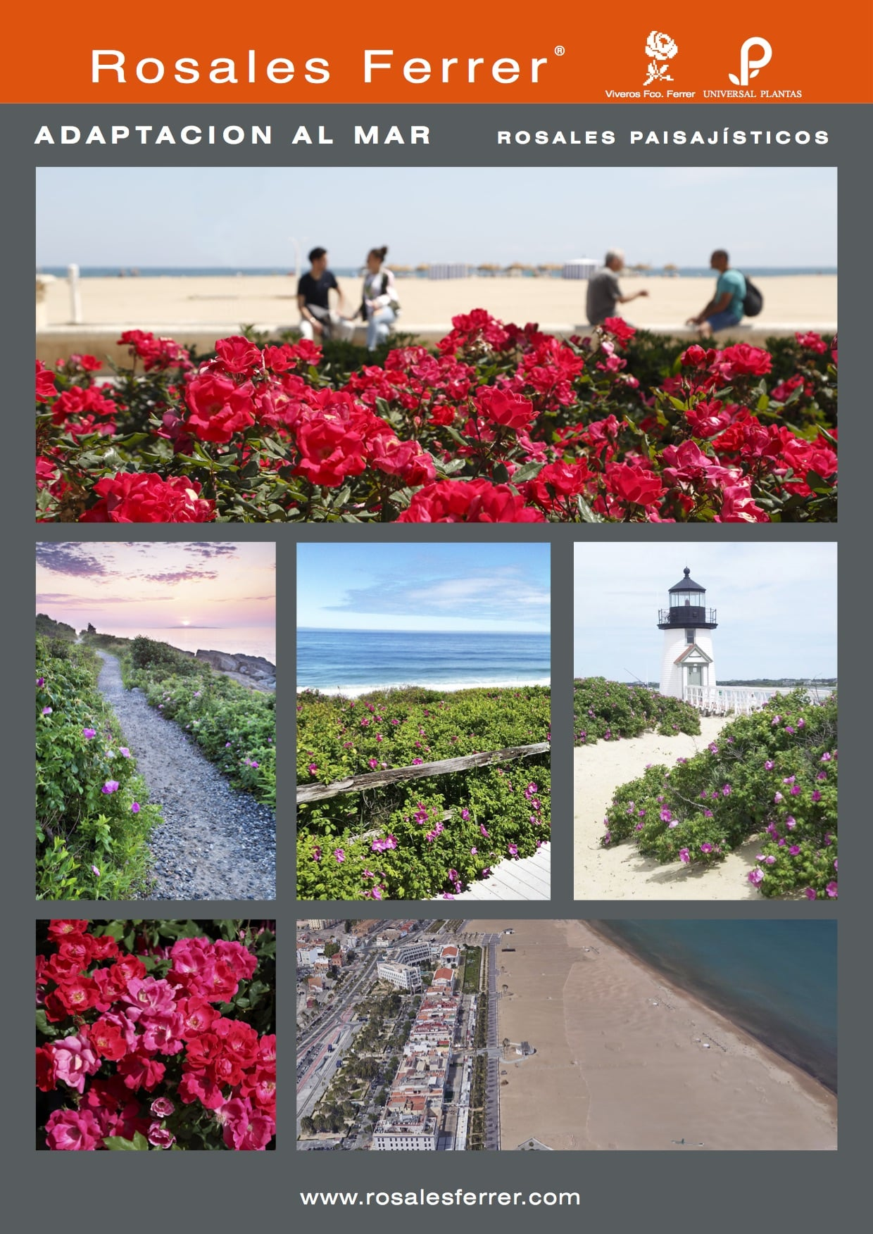 Diferentes aplicaciones del rosal en jardiner a p blica for Jardineria rosales
