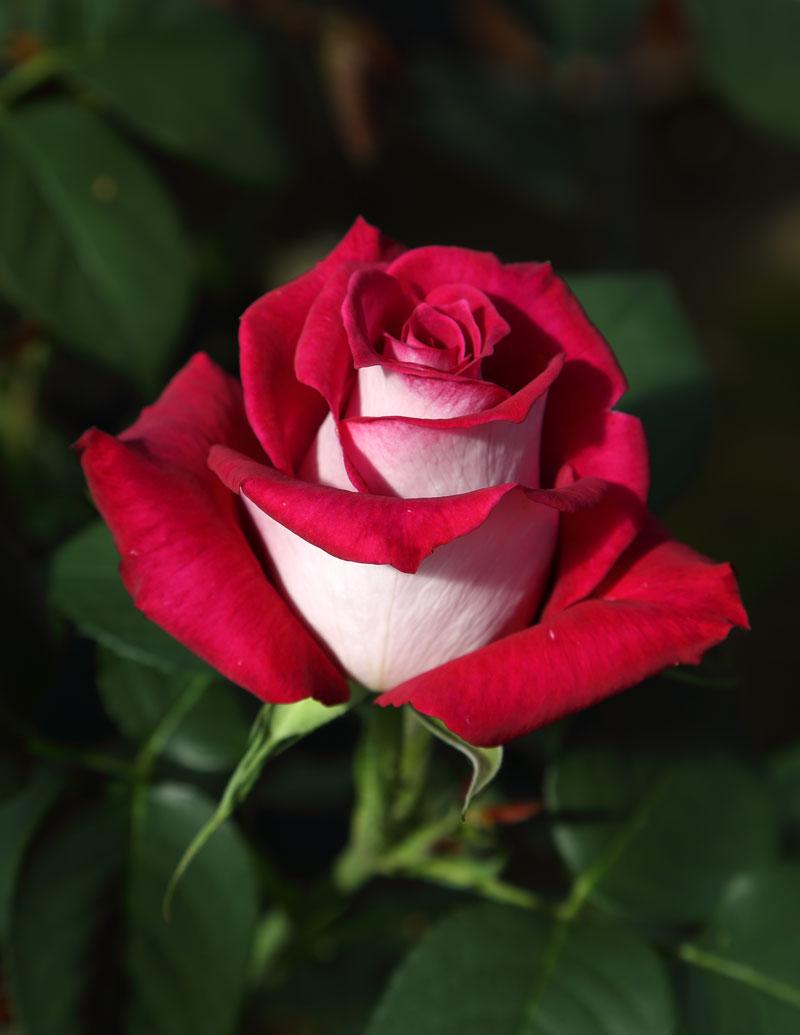 Monica bellucci rosales ferrer for Viveros el rosal